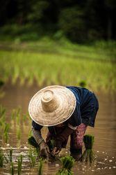 讀唐詩學中文字遊戲表單-憫農詩
